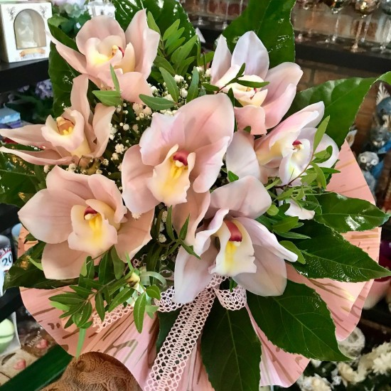 Kytica Orchidea