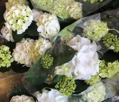 Ďalší sortiment - Črepníkové kvety